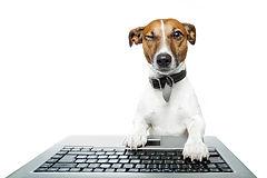 Hund mit Computer.jpg
