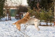 sylvie`s hunder-29.jpg