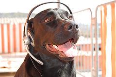 Hund telefoniert.jpg