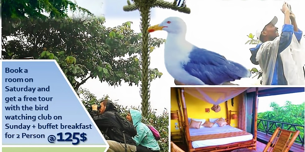 Bird watching tour special package