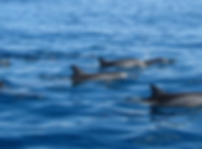 Website-dolphin.png