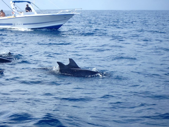 Swimming-with-Wild-dolphins-006.jpg