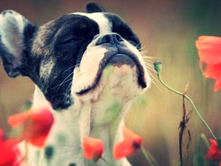 End of the year: Stop, smell the flowers, & give thanks
