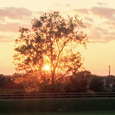 Tree Sunset, included with rental ;)