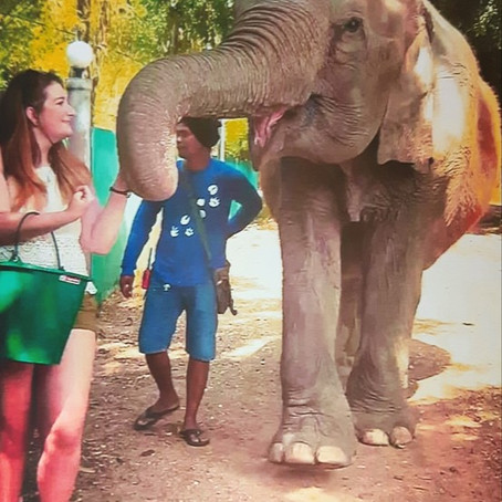 Doctor, doctor, there's an elephant in the room...