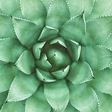 Planta verde