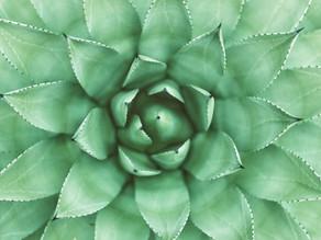 Como são formados os tecidos de uma planta?
