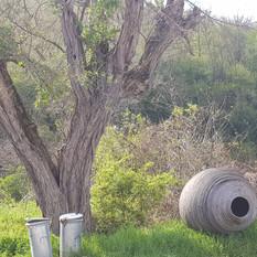 בולגריה - Nature Art