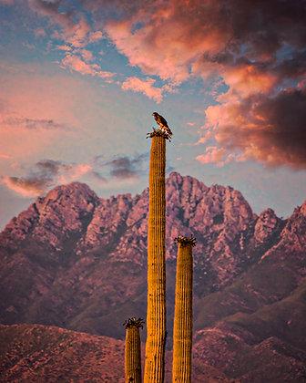 Four Peaks Hawk