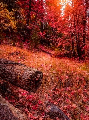 Fallen Fall Log