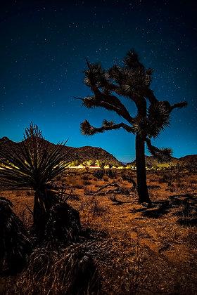 Starry Joshua Tree