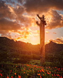 cactusbone.jpg