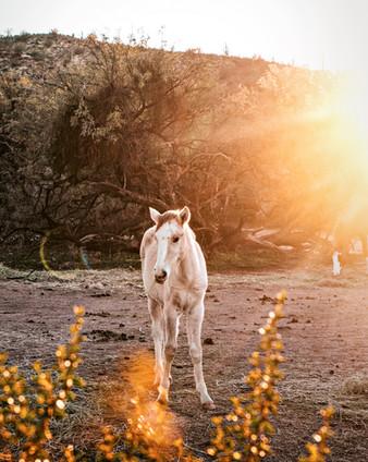 whitebabyhorse.jpg