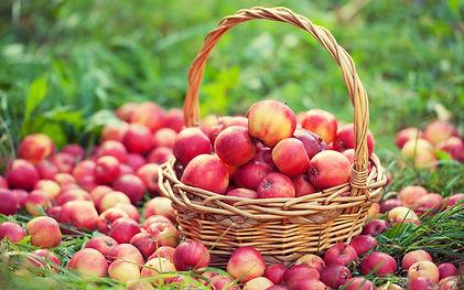 Apples_Many_Wicker_494595_3840x2400.jpeg