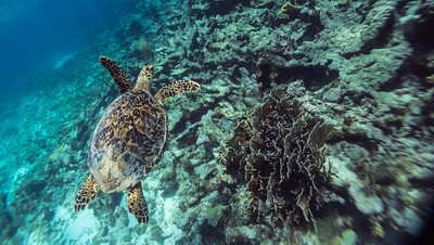 Diving and Snorkelling in the Caribbean