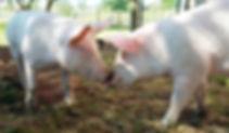 are-animals-sentient-small.jpg