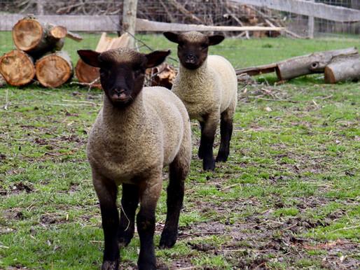 Late Spring Farm News