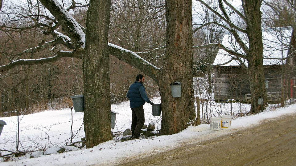 A man wearing a blue jacket holds lifts a bucket from a maple tree.  He stands next to a dirt road with a snowy field behind him.