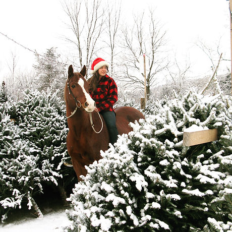 Woman in red flannel shirt and santa hat on a brown horse in snow covered Christmas trees.