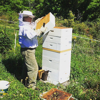 Woman wearing a white beekeeper suit holding a part of a hive and looking at it.