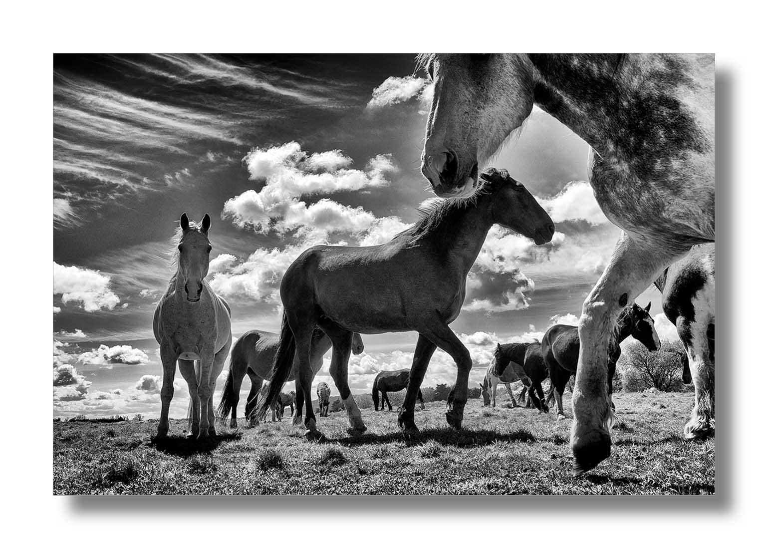 horses-play.jpg