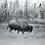 Thumbnail: New York City Fairbanks City