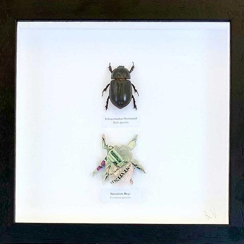 Rare and common species. 2021_No.2 (b)