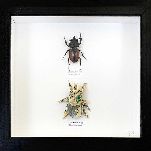 Rare and common species. 2021_No.9 (i)