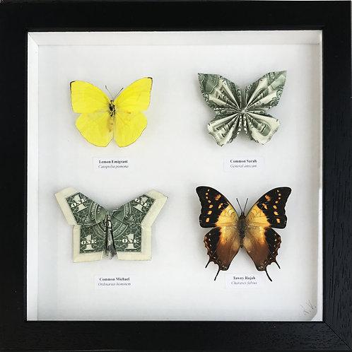 Rare and common species. 2020_No.6