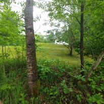 buissons vue du lac.jpg