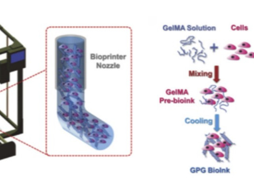 Using GelMA for 3D Bioprinting