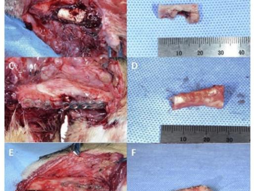 Tissue Engineering in Veterinary Medicine