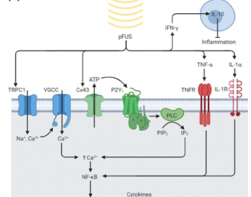 Using Sound for Tissue Engineering