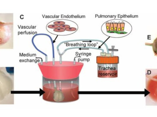 Lung and Airway Engineering
