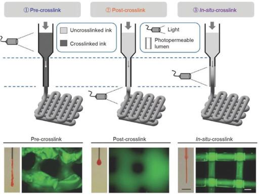 Printing Photocrosslinkable Bioinks