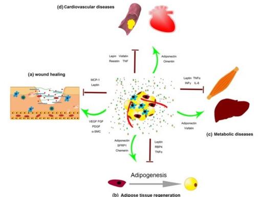 The Use of Conditioned Medium in Regenerative Medicine
