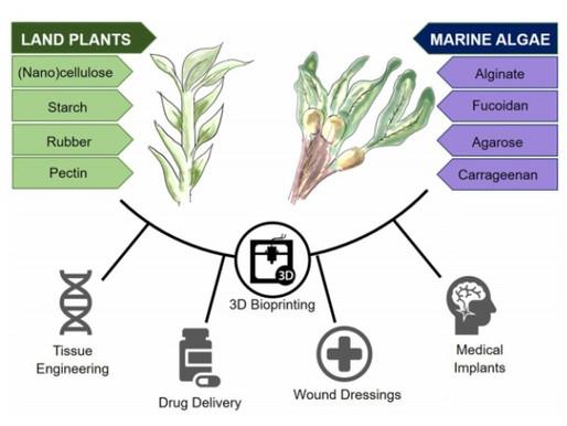 Plant-Based Bioinks for Tissue Engineering