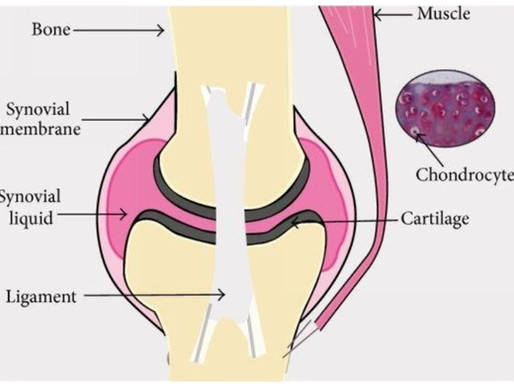 Tissue Engineering Cartilage for the Knee