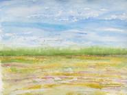 Sunny Field Day (South Carollina Field Series)