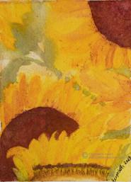 Rays of Sunshine - Sunflowers