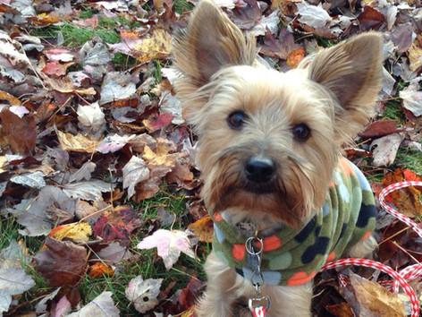 Ti-Bob dans les feuilles