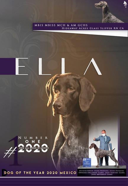 2020 dec dog of year .jpg