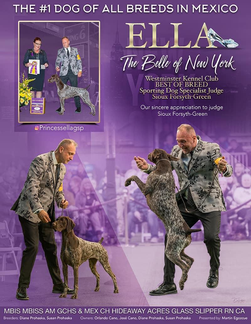 feb 2020 show scene ad .jpg