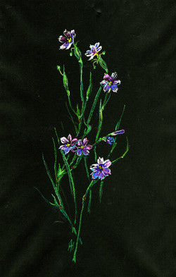 Blue Eyed Grass (Sisyrinchium bellum