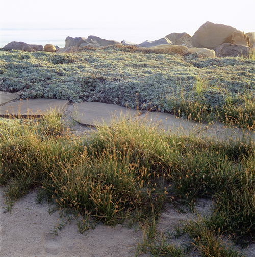 BEACH & MARSH LANDSCAPE