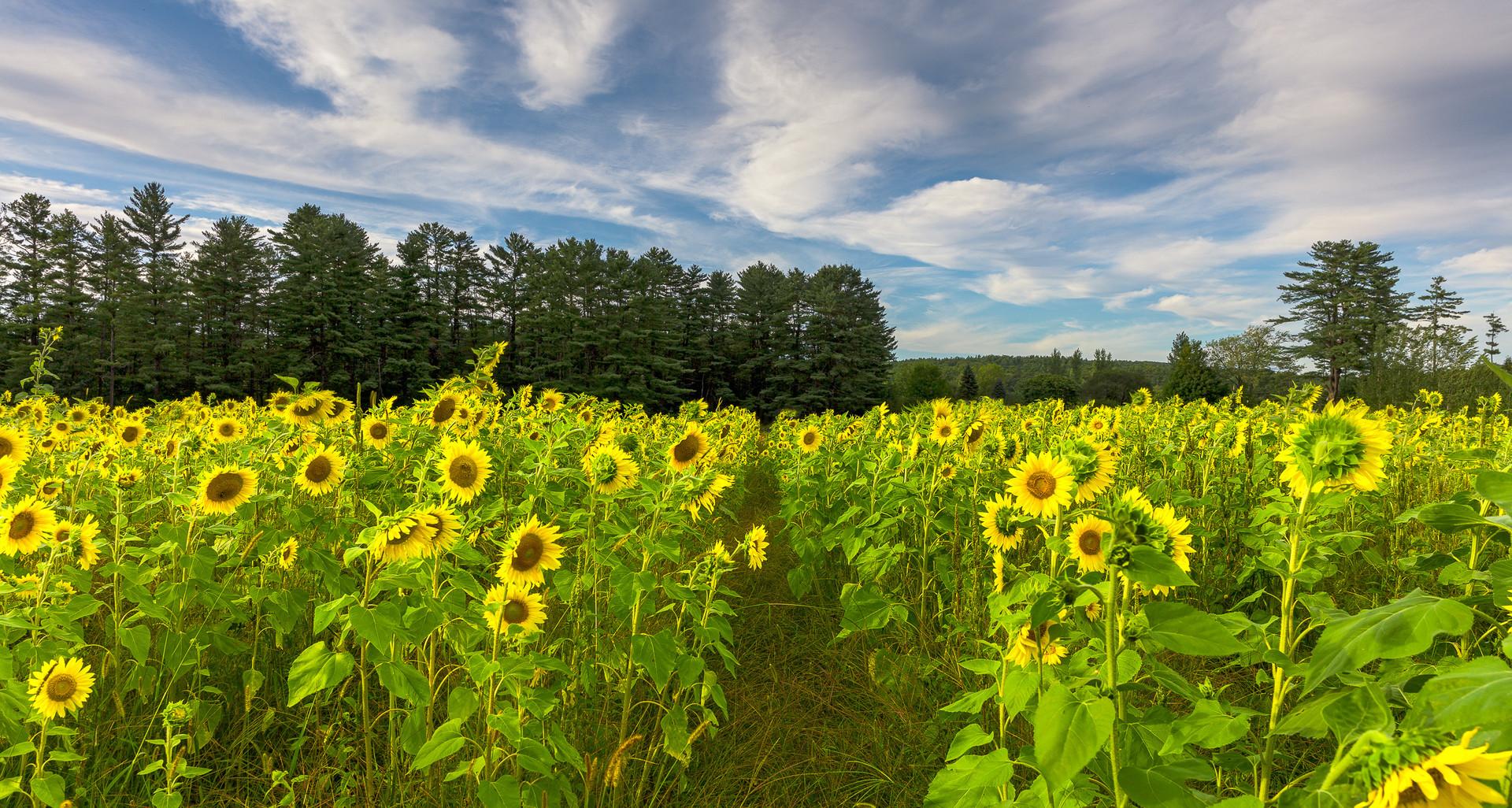 An Aisle of Sunshine
