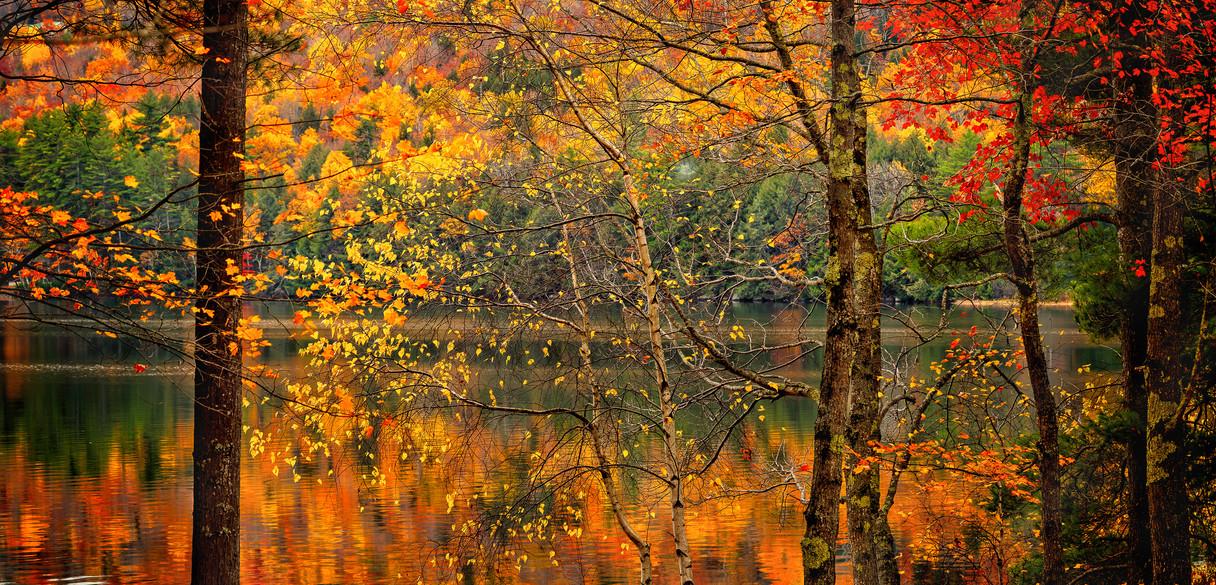 Autumn through the Trees