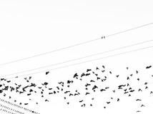 Aviary 18
