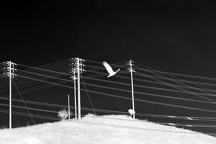 Nathalie Strand Photography