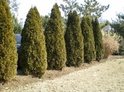 plantings005lg.jpg